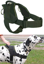 Best Dog Training Harness for DOG