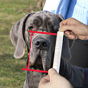 Get to know how to measure your dog