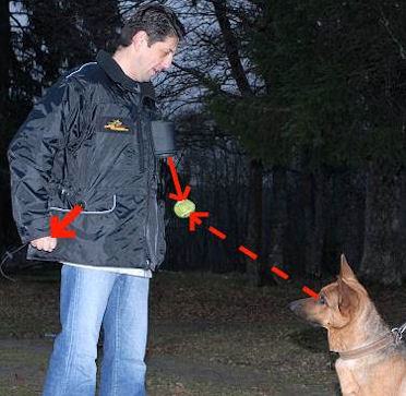 Dog Trainer Vests-Dog Trainer coat for dog training