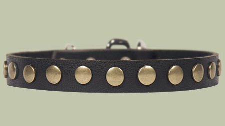 Studded Leather Puppy Collar for DOG puppy