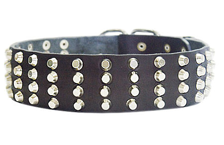 Wide Studded Leather Dog Collar-2 inch wide for police dogs
