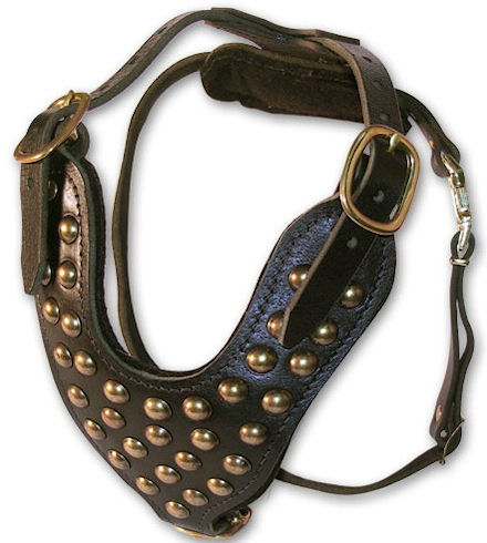 padded studded leather dog harness