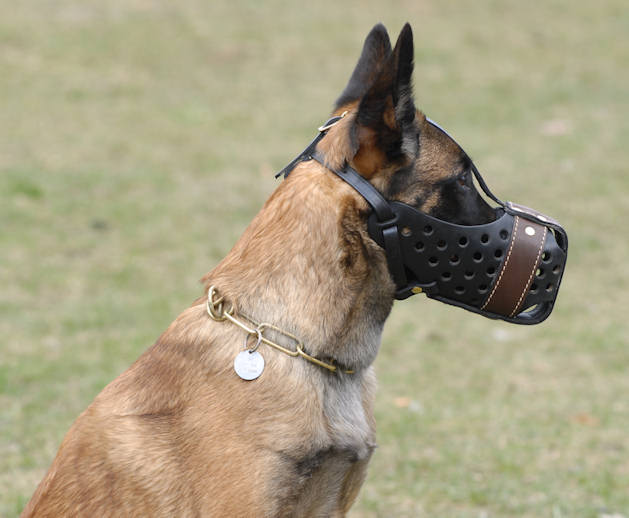 "Leather dog muzzle ""Dondi""-plus style"
