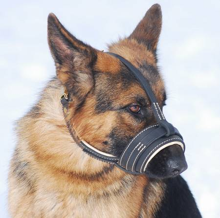 Royal Nappa Leather Dog Muzzle - product code : M88