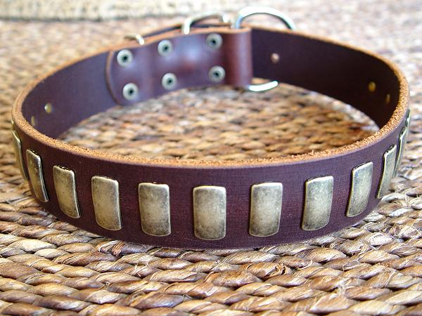 Gorgeous Wide Leather Dog Collar With Plates for dog training or for dog owners