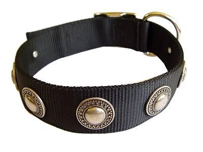 Nylon Dog  collar with silver conchos for dog training or for dog owners