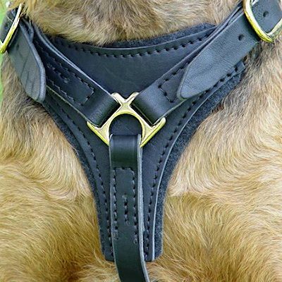 leather padded dog harness